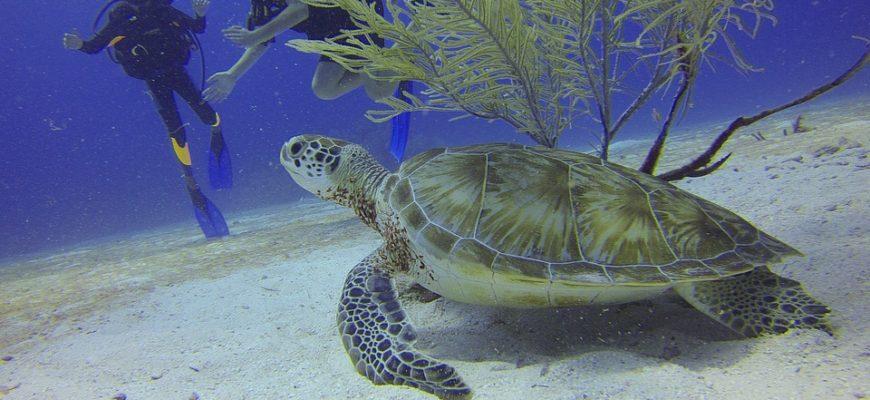 La Guadeloupe, une destination célèbre pour les activités nautiques