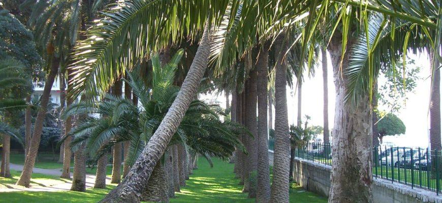 Parc Vigier à Nice